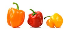 Peppers - Irish wholesale prepared fruit and vegetables for the catering industry